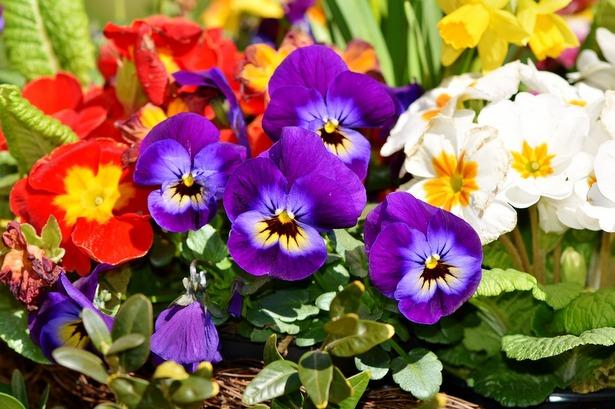 В Воротынске объявлен смотр-конкурс цветников